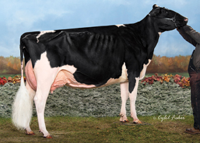 7HO10506d_03_201410_Jacobs Atwood Vedette